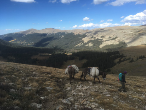 Wilderness travel with donkeys
